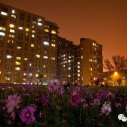 北京林业大学夜景—花海
