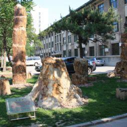 北京林业大学校园里的木化石群(硅化木)