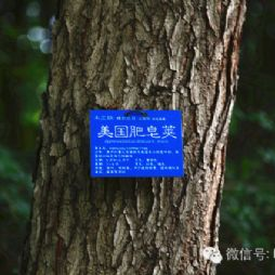 北京林业大学的树牌