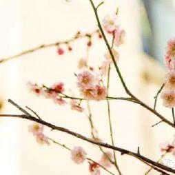 去看看,北林的春天