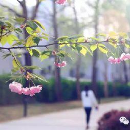 """2016""""最美北林""""摄影大赛获奖作品"""