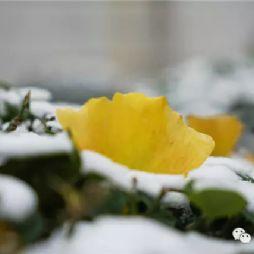 北京林业大学2016年末的第一场雪