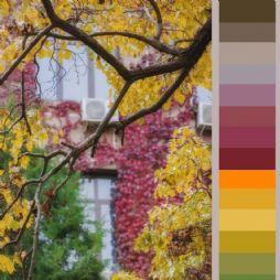 北京林业大学:渐变的颜色