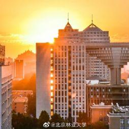 北京林业大学67周年校庆(风景)