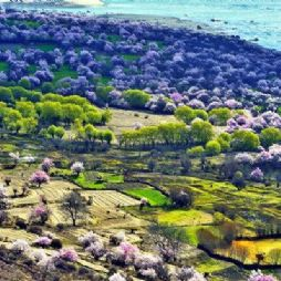 【转】西藏林芝桃花沟-这个春天,地球上最美的地方