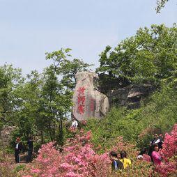 黄狮寨(金寨)赏杜鹃(20180427)