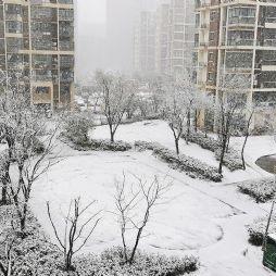 庚子年春雪(20200215)