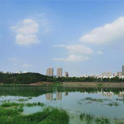 六安-淠河下龙爪(20200530)