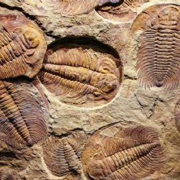 给叫叫讲中国史-番外篇2-地球历史上的几次生物大灭绝